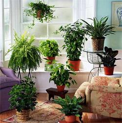piante in casa fanno bene