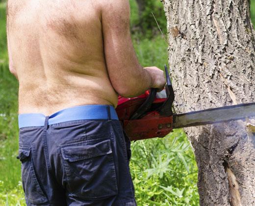 killer_alberi
