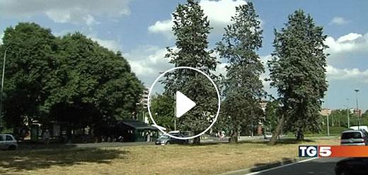tg5_alberi520