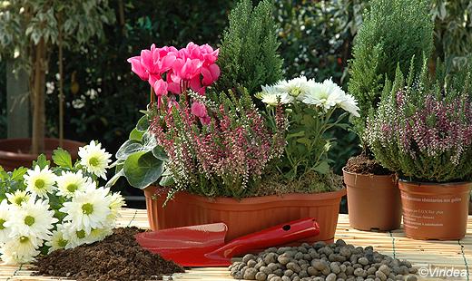 Malinconia autunnale fiori ed erbe sul balcone ci aiutano for Immagini fiori autunnali