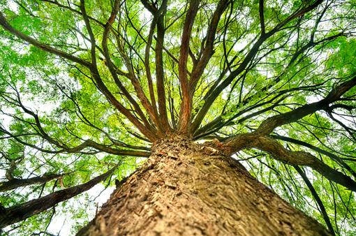 albero_struttura510