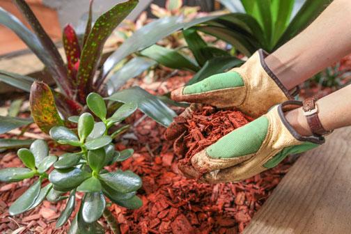 Tanto caldo, come bagnare le piante senza impazzire?   Fiori e Foglie