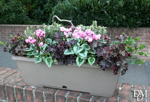 Fioriere Per Fiori ~ Facciamo le fioriere per la brutta stagione fiori e foglie