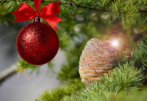 Foto Di Natale Anni 60.Abruzzo In Piazza Lo Stesso Albero Di Natale Da Piu Di 60 Anni