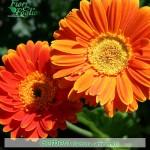 Fiori Arancioni Nomi.Come Si Chiama Diamo Un Nome A Fiori E Piante Fiori E Foglie