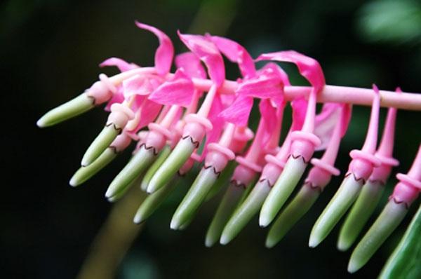 Fiori esotici gli incontri verdi delle vacanze fiori for Fiori verdi