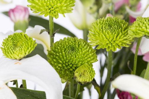 Fiori Verdi Nomi.La Rivincita Del Crisantemo Fiori E Foglie