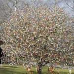 albero_delle_uova520