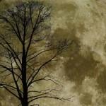 alberi_lunari500