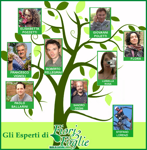 albero_esperti2016
