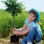 piantare_albero