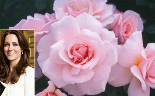 Fiori In Inglese.La Rosa Di Kate Middleton Fiori E Foglie