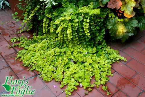 Una Cascata Vegetale Dai Vasi Sul Balcone Fiori E Foglie
