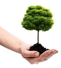 albero_piantare200
