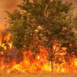 incendio_alberi500