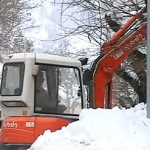 alberi_neve500