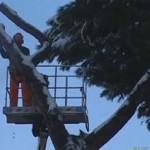 alberi_neve_roma300