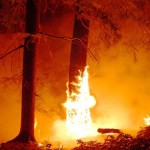incendio_alberi1_500