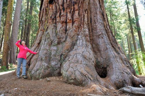 albero grande500 Oggi si festeggia la Giornata dellAlbero con un abbraccio nazionale