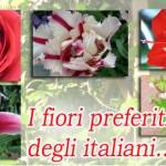 fiori_preferiti520
