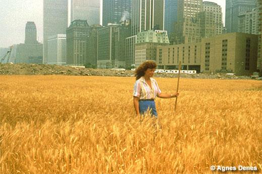 wheatfield520