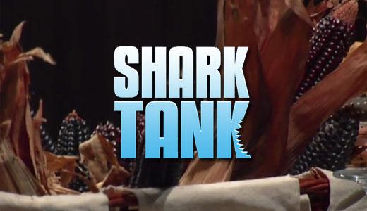 shark_maiscorvino520