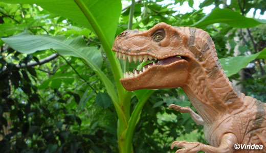 Jurassic_park_plant520