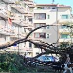 alberi_nubifragio