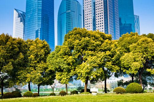 alberi_verde_shangai