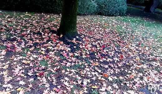 foglie_cadute520