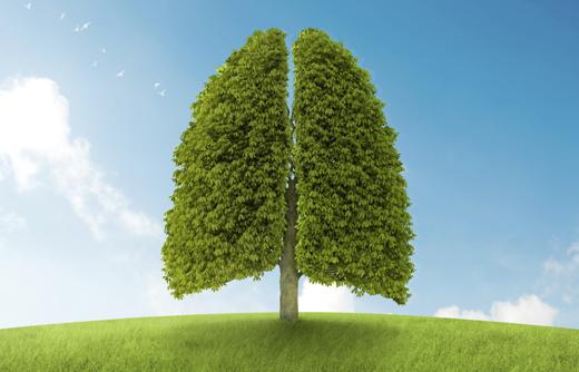 piante_polmoni520