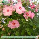 fiori_gallery_discobelle