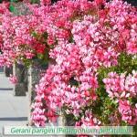 fiori_gallery_parigini