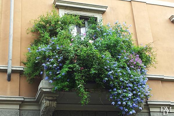 Rubrica come creare belle fioriere per balconi e terrazzi for Fiori perenni pieno sole