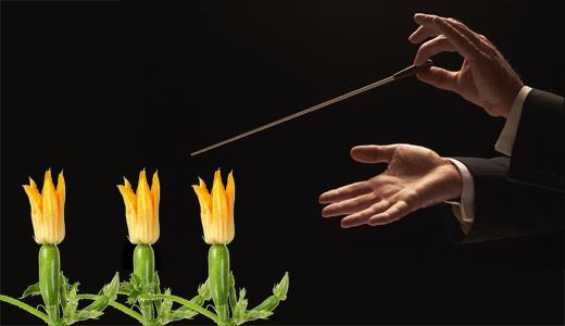 Risultati immagini per mozart e zucchine