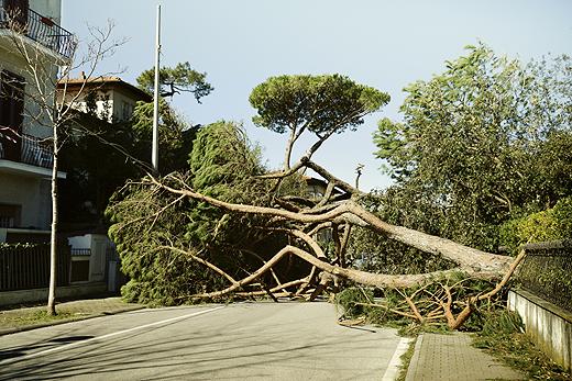 albero_caduto_citta520