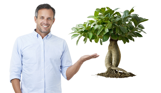 papa_bonsai_ficus520