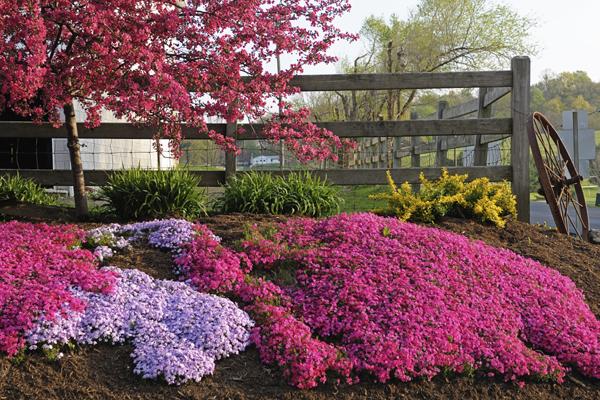 Il muschio rosa del signor kuroki piantiamo anche noi for Piccoli giardini rocciosi