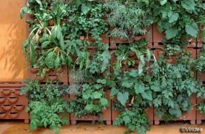 l 39 orto in poco spazio facciamolo verticale fiori e foglie