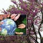 giornatadellaterra_alberi520