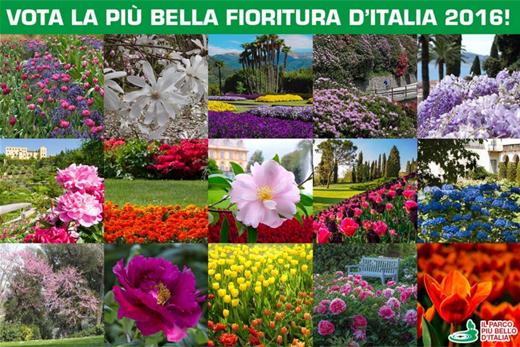 sondaggio_fioriturapiubella