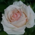 rosa_RosenkavalierKleiber1