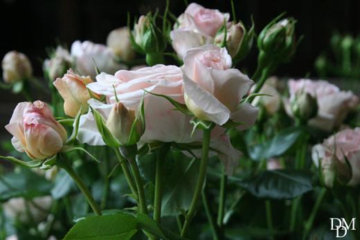 rosa_RosenkavalierKleiber52