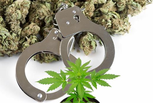 cannabis_manette520
