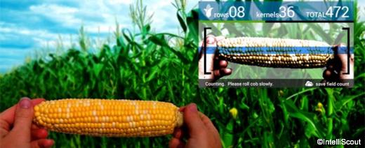 google_glass_agricoltura3