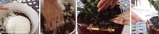 video_pannolini_piante