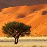 albero_deserto_africa