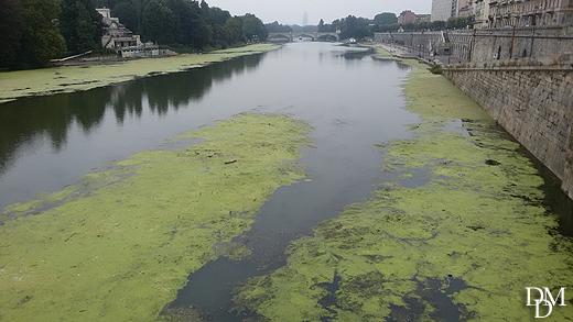 fiume_po_verde1