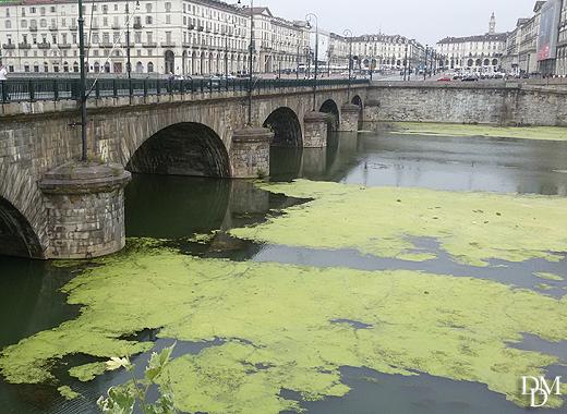 fiume_po_verde2
