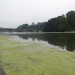 fiume_po_verde6